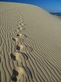 Footprints on dune Stock Photo