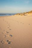 Footprints and Dunes portrait Royalty Free Stock Photo