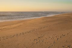 Footprints on empty beach stock images