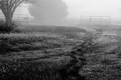 Footprints in the foggy morning. A foggy morning with footprints leading off in to the fog through the dewy grass royalty free stock images