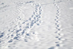 Footprints in the fresh deep snow Royalty Free Stock Image