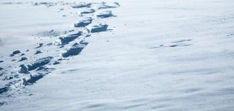 Footprints in fresh white snow. Royalty Free Stock Photo