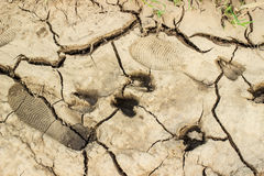Footprints of goats and a shepherd on the cracked soil. Royalty Free Stock Images