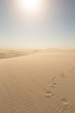 Footprints going over sand dunes. Golden sand dunes in Brazil Stock Photos