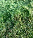 Footprints in the grass Royalty Free Stock Photo