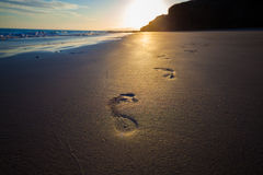 Footprints Homo sapiens Royalty Free Stock Images