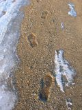 Footprints On An Icy Gravel Path In Winter Royalty Free Stock Photo