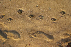 Free Footprints In The Sand Stock Images - 21714564