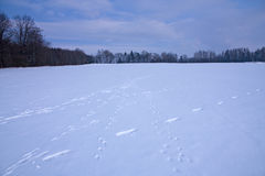 Footprints In Winter Landscape Royalty Free Stock Photos