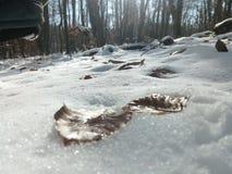 Footprints of leafs Stock Photos