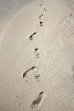 Footprints. Left on the sand Royalty Free Stock Image