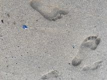 Family footprints in wet beach sand stock image