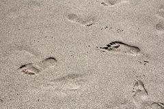 Footprints legs Stock Images