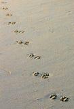 Footprints, Mexico Royalty Free Stock Image