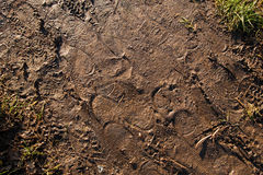 Footprints in mud Royalty Free Stock Images