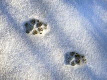 The footprints of a natural animal tracks in the snow. Print trace of the predator in the winter Royalty Free Stock Images