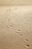 Footprints Royalty Free Stock Images