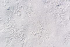 Footprints in Packed Snow. Make a wintery background image Royalty Free Stock Image