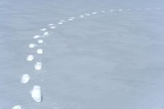 Footprints path in the snow. Footprints path crossing a snowy terrain royalty free stock image