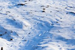 Footprints from the paws of the beast on the snow. As a background Royalty Free Stock Images