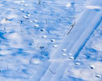 Footprints from the paws of the beast on the snow. As a background Stock Image
