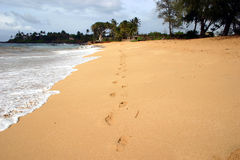 Footprints in the sand. Footprints on a beach in Maui. This is a wide angle version of this picture Stock Images