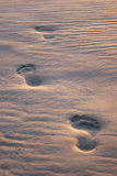 Footprints in the sand. At sunset Royalty Free Stock Images