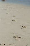 Footprints in the sand. Along the shore Stock Image