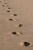 Footprints in the sand. A pair of human footprints in the sand Royalty Free Stock Photo