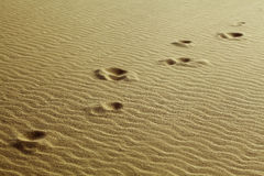 Footprints in the sand. Human footprints in the sand of desert Stock Photo