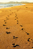 Footprints in the sand. Beach daylight drawings footprints heat in sand Stock Image