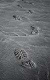 Footprints on sand. Black and white Stock Photo
