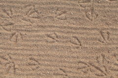 The footprints in the sand Royalty Free Stock Image