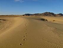Footprints in Sand. Dunes in Mongolia Royalty Free Stock Image