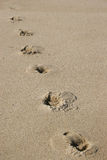 Footprints in the sand. Vertical of footprints in the sand Royalty Free Stock Photos