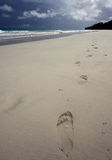 Footprints in the Sand. With ocean and cloudy sky Stock Image