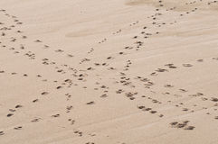 Footprints on sand Royalty Free Stock Photos