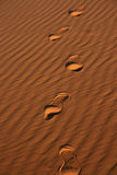 Footprints in sand. In the Sahara desert Stock Photography