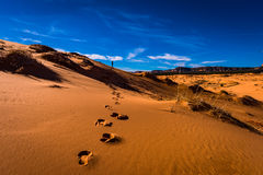 Footprints in the sand. alone in the desert Royalty Free Stock Photo