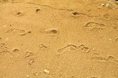 Footprints in the sand Stock Photos