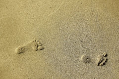 Footprints in the sand on the beach Stock Photography