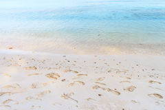 Footprints in the sand on beach Stock Images