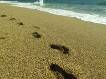 Footprints in the Sand at the Beach royalty free stock photography