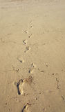 Footprints on The Sand. The beach is just like a playground for some of us. You can swim, dive, or just walk around and leave some footprints on the sand Stock Photography