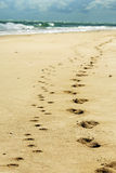 Footprints in sand on beach from man & pet dog. A trail of footprints leading up the white golden sands of the tropical island beach of a man and his dog Royalty Free Stock Photography