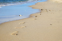 The footprints on the sand beach near to sea. Royalty Free Stock Photos