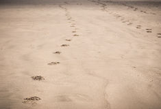 Footprints in sand on beach Royalty Free Stock Photography