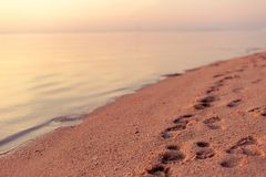 Footprints in the sand on the beach during sunset, background tr. Avel and leisure concept Royalty Free Stock Image