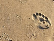 Footprints in sand on California beach in the summer. On a travel vacation, this could be used for traveling blogs, copy space. Royalty Free Stock Image
