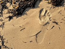 Footprints in sand on California beach in the summer. On a travel vacation, this could be used for traveling blogs, copy space. Stock Photos